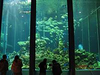 190102miho-aquarium.jpg