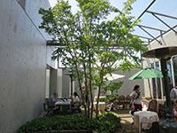 140510kawagoe2.JPG