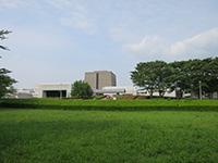 140621sakura1.JPG
