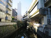 160104furukawa2.jpg